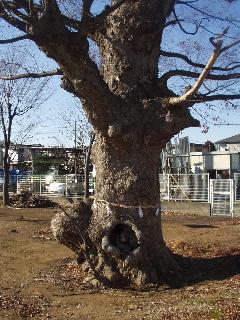 kiyotake_kusu_00.jpg
