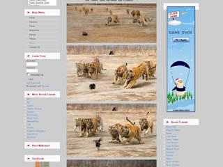 TigersVs1Turkey.jpg